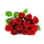 A dozen red roses on a white background