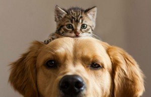 cat-and-dog-friends-001